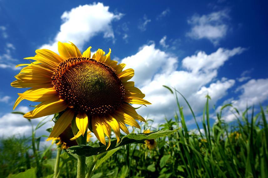0 夏の花.JPG