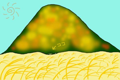 10 ススキの海.jpg