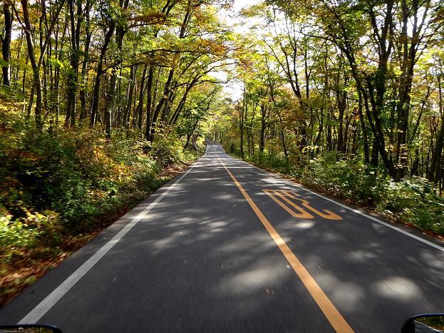 11 森のトンネル.JPG