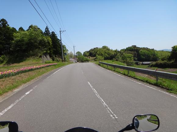 14 春爛漫な田舎道.jpg
