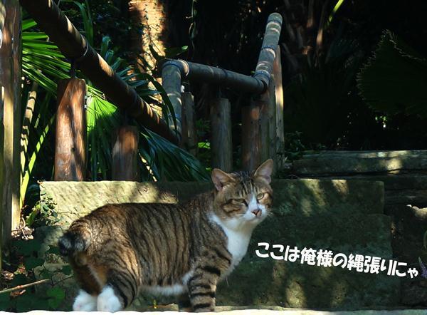 15 ボス猫登場.jpg