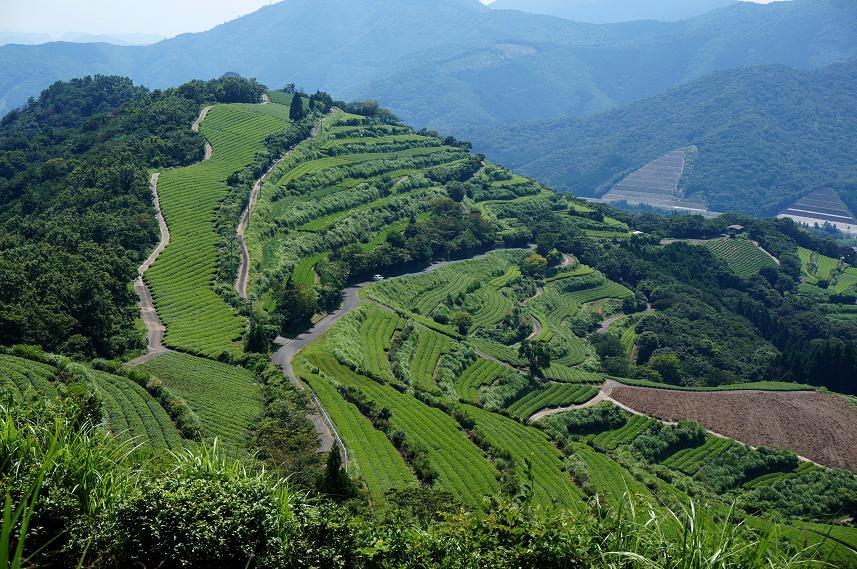 15 天空の茶畑.JPG