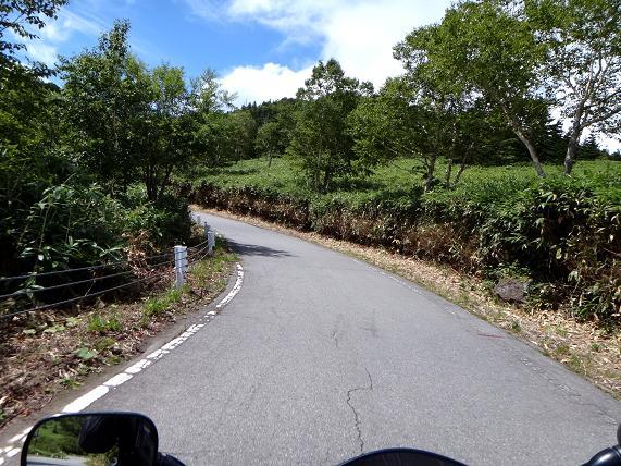 15 明るい林道は気持ちが良い.JPG
