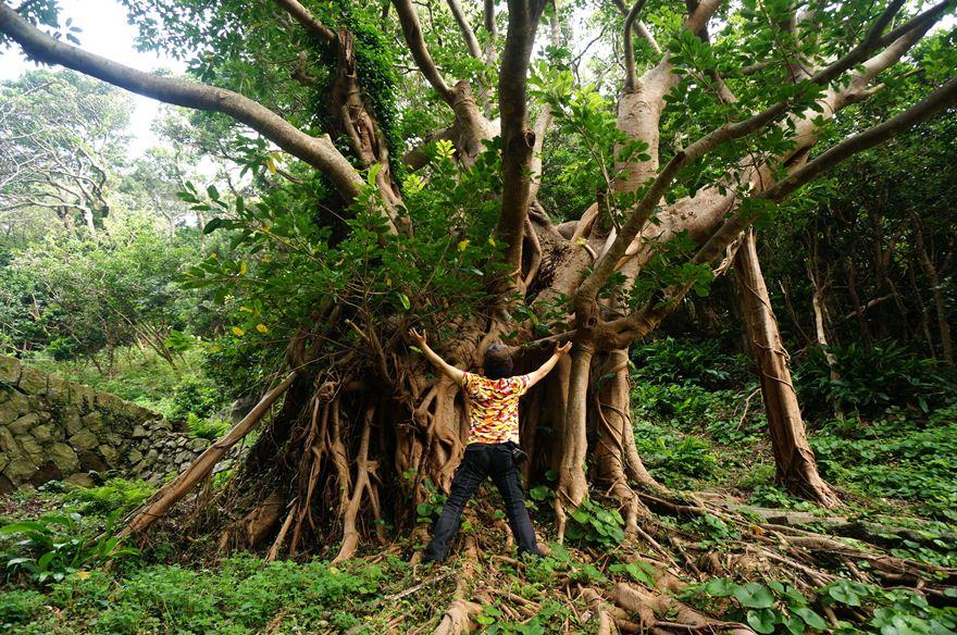 17 大木の霊気を貰います.JPG