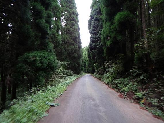 19 ワクワクする林道です.JPG