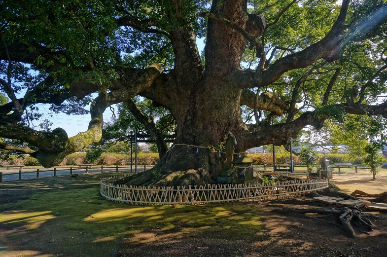 1 巨木の木陰.JPG