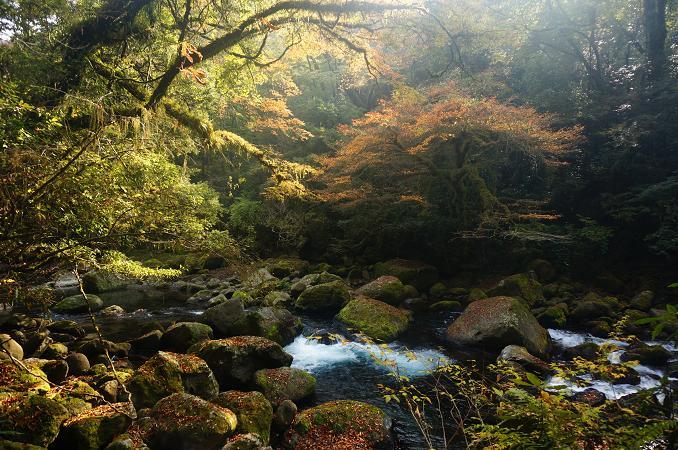 20 渓流は季節を問わず美しい.JPG