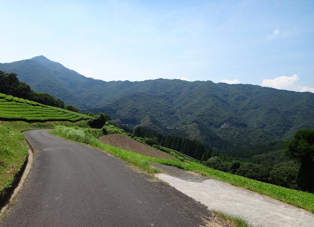 21 茶畑はこの山の斜面のみ.JPG