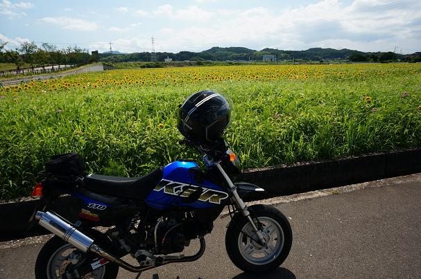 23 大任花園.JPG