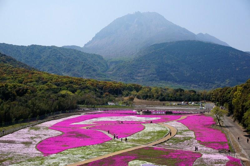 23 復興芝桜.JPG