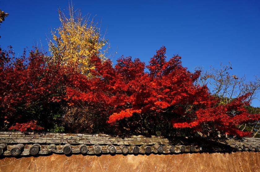 24 同じ紅葉を撮る.jpg