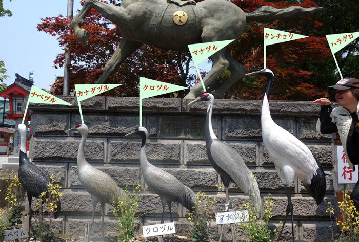 24 鶴の勉強、しやがれ.jpg