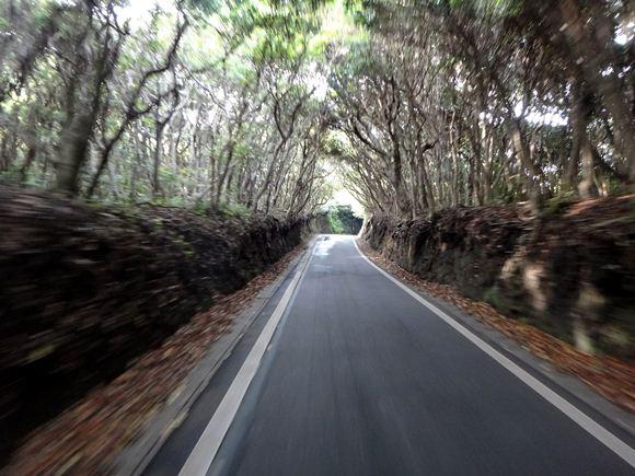 25 岬の森を抜け.JPG