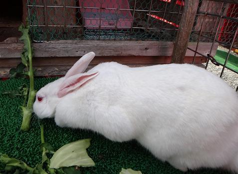 26 長いウサギ.JPG