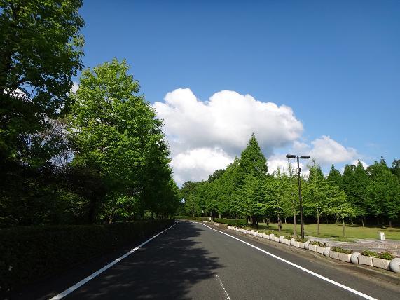 29 夜須高原は野鳥がいっぱい.JPG