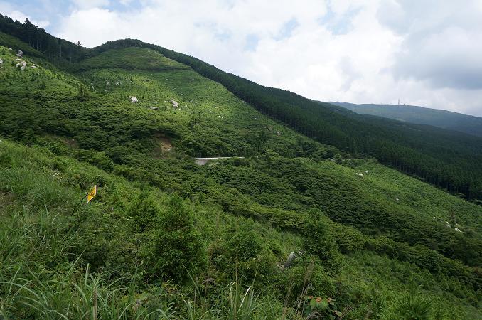 31 かなり大規模な林道です.JPG