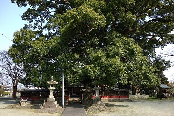 33 これ一本の木です.JPG
