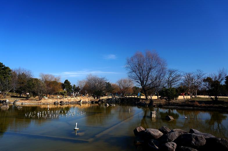 33 綺麗な公園です.JPG