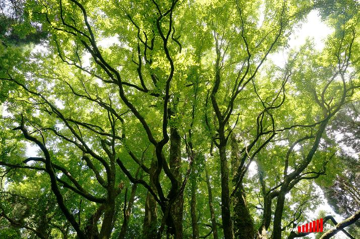38 一本で森です.JPG