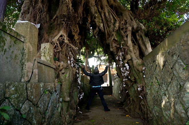 38 下をくぐれるほどの大木です.JPG