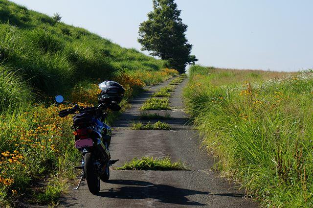 3 ちびっ子バイク用の道.JPG