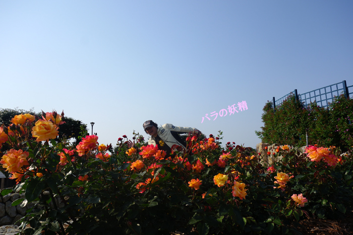 44 腹黒い妖精出現.jpg
