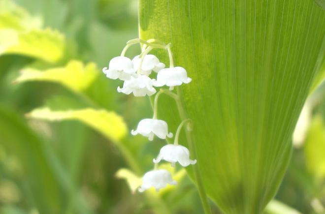 45 めっちゃ可愛い花だよね.JPG