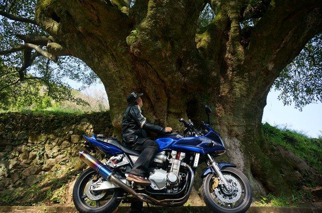 46 オガタマの巨木は初です.JPG
