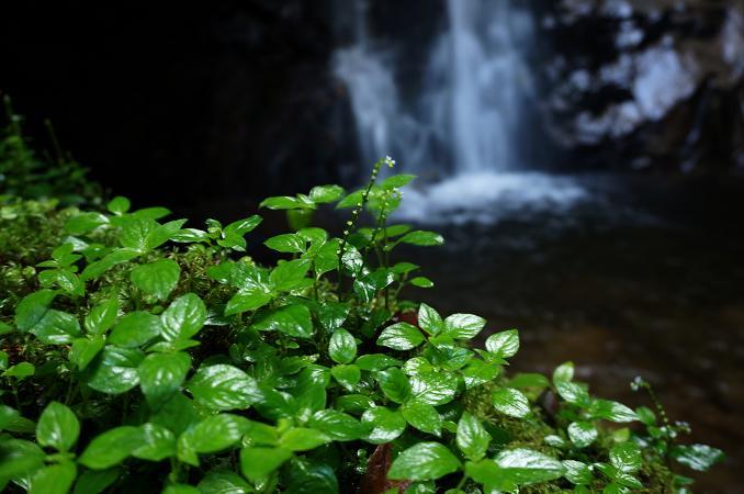 47 滝壺は天然のクーラーです.JPG