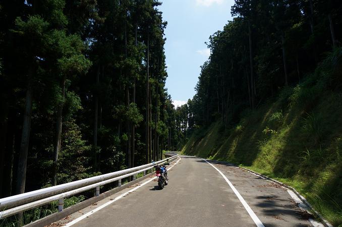 4 大きな規模の林道です.JPG