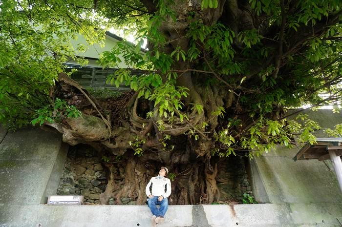5 アコウの木.JPG