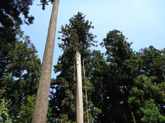 5 森の木.JPG