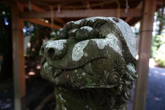 6 目玉クリクリの狛犬.JPG