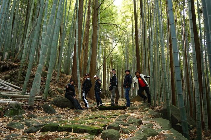 6 賑やかな竹林.JPG