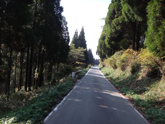 7 思ったより奇麗な林道.JPG