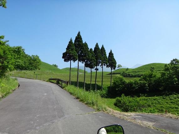 8 ♪ソラソファソソミ杉.jpg
