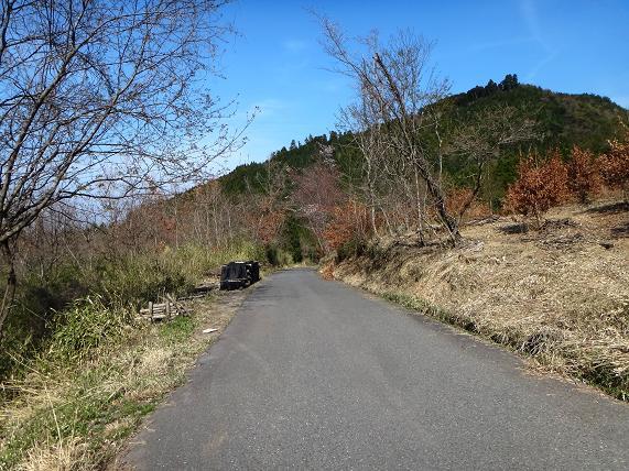 こんな明るい林道、大好き.JPG