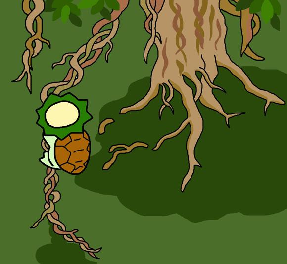 アコウの樹.jpg