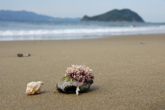 タダの貝殻.JPG
