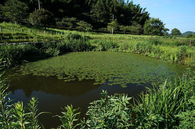ヒシモの池.JPG