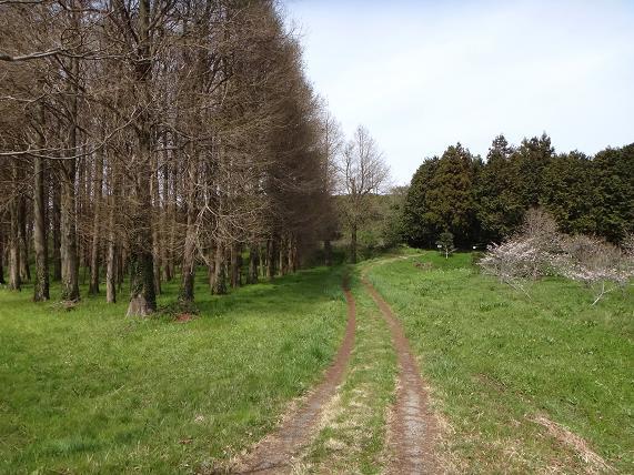 森の道.JPG