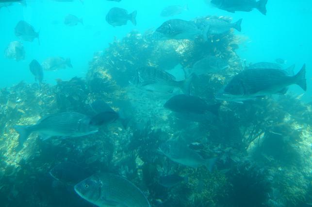 自然の海だけど魚の密度が不自然です.JPG