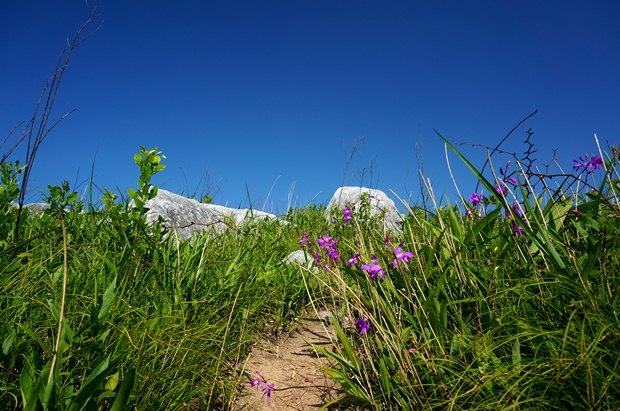 花の登山道.JPG