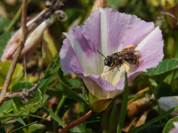 花粉がいっぱい.JPG