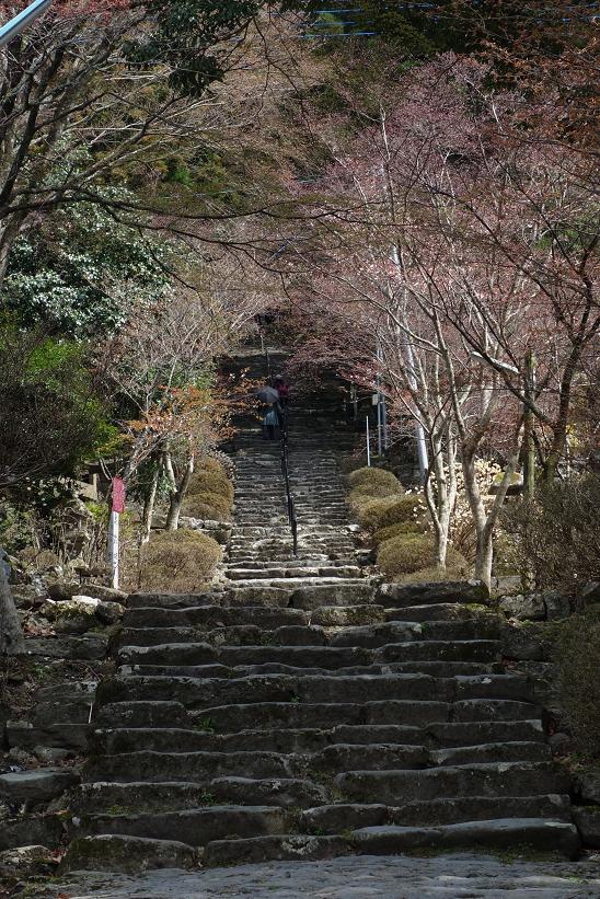 英彦山神社の心臓破りの階段.JPG