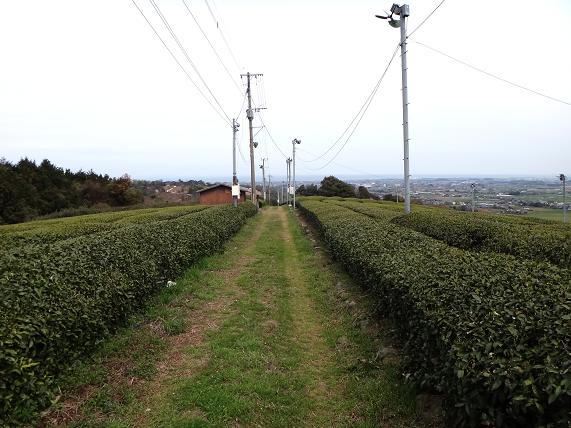 茶畑からアプローチ.JPG