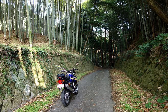 1 ブランド竹の子の山.JPG