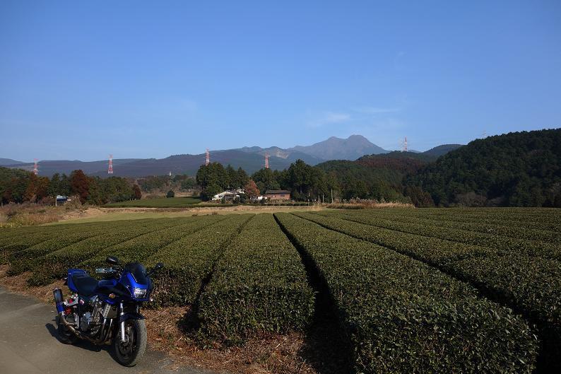 21 阿蘇エリアに茶畑があったんだね.JPG