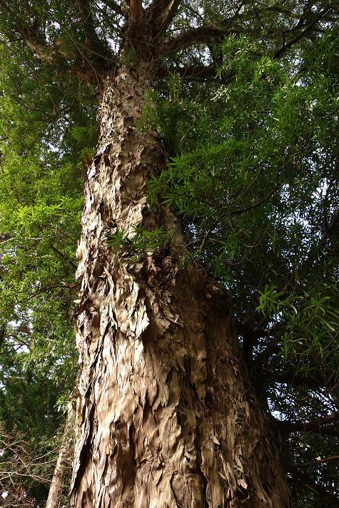 23 大木発見.JPG