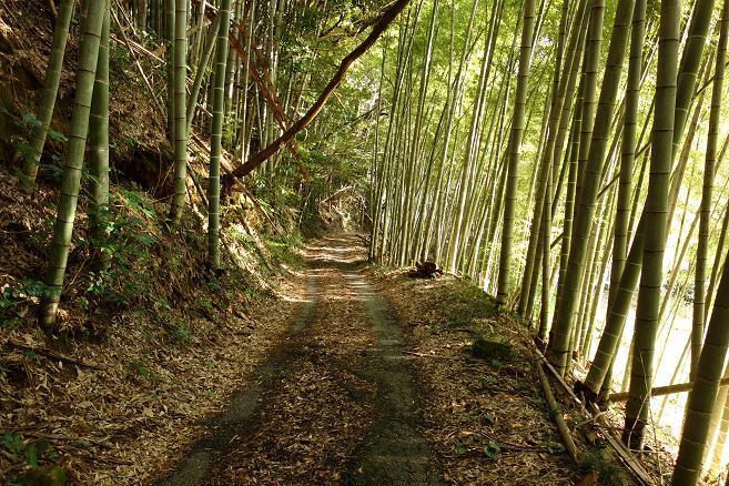 2 しゅてきな林道.JPG